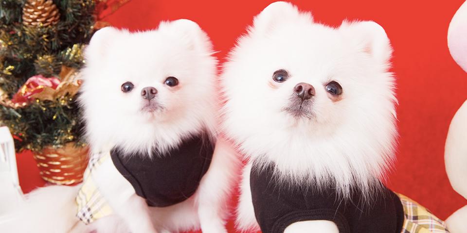 【2020年最新】松戸市で犬を預けるおすすめのペットホテルを紹介